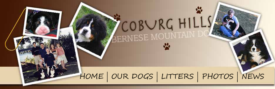Coburg Hills Bernese Mountain Dogs