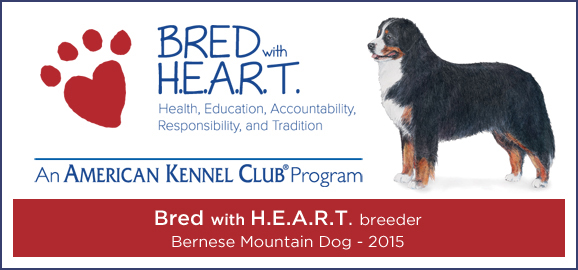 Coburg Hills Bernese Mountain Dogs Available Bernese